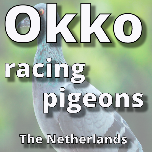 Okko Racing Pigeons